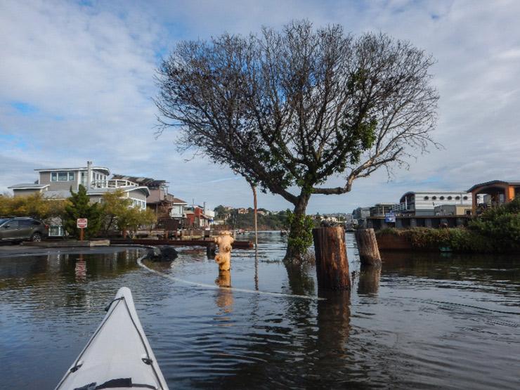 King Tide Project Photo-Ops Jan 20, 21